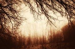 Foto do vintage da floresta velha Fotografia de Stock Royalty Free