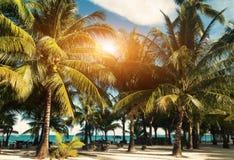 Foto do vintage da praia do paraíso com palmas e cadeiras de sala de estar Foto de Stock Royalty Free