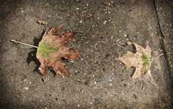 Foto do vintage das folhas após a chuva Imagem de Stock Royalty Free