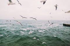 Foto do vintage de gaivotas do voo Paisagem bonita do mar Imagem de Stock