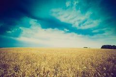 Foto do vintage de nuvens de tempestade sobre o campo de trigo Foto de Stock Royalty Free