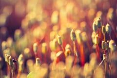 Foto do vintage do musgo de florescência da floresta Fotos de Stock Royalty Free