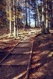 Foto do vintage do trajeto do outono na floresta Foto de Stock