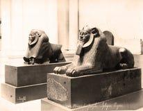 Foto 1880 do vintage: esfinge 2 de pedra no museu do Cairo, Egito Fotografia de Stock