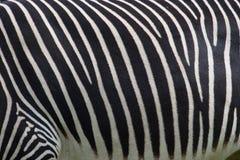Foto einer Zebrabeschaffenheit Stockfoto