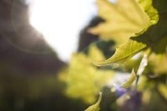 Foto eines gelben Baumblattes Stockbild