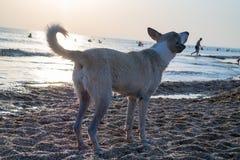 Foto eines Hundes in den Strahlen der untergehenden Sonne auf der Küste Lizenzfreies Stockfoto
