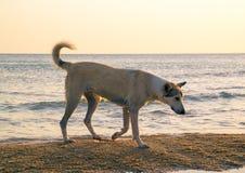 Foto eines Hundes in den Strahlen der untergehenden Sonne auf der Küste Lizenzfreie Stockfotografie