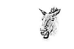 Foto eines Pferdekopfs stockbild