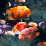 Foto eines tropischen Fisches Lizenzfreie Stockbilder
