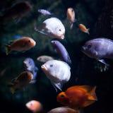 Foto eines tropischen Fisches Stockbild