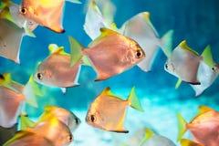 Foto eines tropischen Fisches Stockfoto