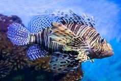 Foto eines tropischen Fisches Stockfotos