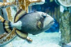 Foto eines tropischen Fisches Lizenzfreies Stockfoto