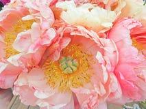 Foto eingelassener Sommer Rosa Pfingstrosenblumen, empfindliche Blumen für lizenzfreie stockfotografie