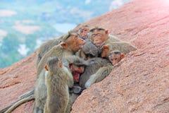 Foto eingelassenes Indien Affefamilie schläft im Berg im Th Stockfotografie
