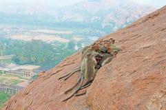Foto eingelassenes Indien Affefamilie schläft im Berg im Th Lizenzfreie Stockfotos