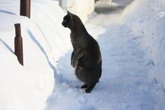 Foto engraçada de um gato Fotos de Stock