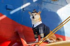 Foto engraçada do cão do inu de Shiba Foto de Stock Royalty Free