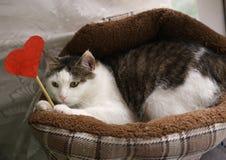 Foto engraçada do gato na cama do animal de estimação com coração de papel fotografia de stock