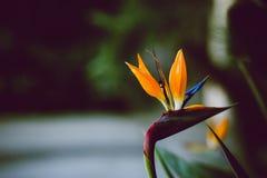 Foto esotica astratta del fiore con spazio negativo Fotografie Stock