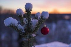 Foto exterior bonita da bola vermelha da decoração do Natal na árvore nevado pequena Fotografia de Stock Royalty Free