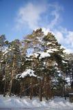 Foto exterior de la acción de la luz del día del árbol cubierta en nieve con el cielo azul semi-nublado en el fondo Imágenes de archivo libres de regalías