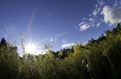 Foto för fisköga av soluppsättningen i natur Royaltyfri Bild
