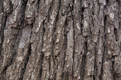 Foto för trädskäll Royaltyfria Foton