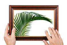 Foto-Feld in den Händen Stockbild