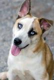 Foto fornida de la adopción de la mezcla del ojo azul Foto de archivo libre de regalías