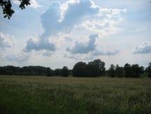 Foto från ett sommarfältlandskap med grönt gräs och himmel, långvariga lockiga illavarslande moln arkivbilder
