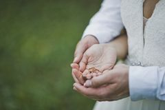 Foto grande de las manos que abrazan a los recienes casados 7062 imagen de archivo