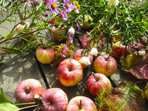 Foto hermosa con las manzanas, hojas rojas, flores Foto de archivo libre de regalías