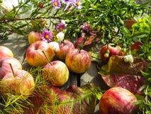 Foto hermosa con las manzanas, hojas rojas, flores Fotografía de archivo