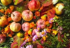 Foto hermosa con las manzanas, hojas rojas, flores Imágenes de archivo libres de regalías