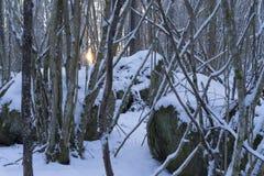 Foto hermosa de la naturaleza de la tarde fría del invierno en bosque y bosque suecos Imagen de archivo