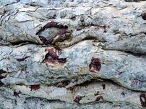 Foto horizontal da textura da casca de árvore Fotografia de Stock