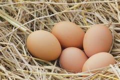 Foto horizontal de diversos ovos de galinha que são colocados no monte de feno agradável das palhas e da cesta de vime secadas do Imagem de Stock