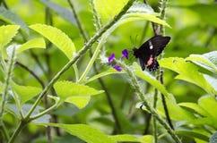 Foto horizontal en color sobre una mariposa fotografía de archivo libre de regalías