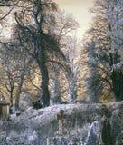 Foto infrarroja de una yarda grave fantasmagórica con los árboles fotos de archivo libres de regalías