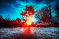 Foto infrarroja del sol que se deslumbra a través de los árboles Imagenes de archivo