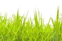 Foto isolata fondo dell'erba Immagine Stock Libera da Diritti