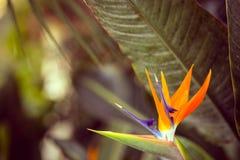 Foto luminosa soleggiata e arancio della pianta Immagine Stock