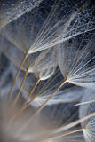 Foto macra abstracta de las semillas de la planta Imagen de archivo