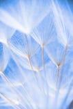 Foto macra abstracta de las semillas de la planta en una mañana Imagenes de archivo