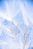Foto macra abstracta de las semillas de la planta en una mañana Foto de archivo