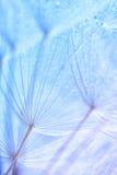 Foto macra abstracta de las semillas de la planta en una mañana Fotos de archivo libres de regalías
