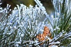Foto macra Bosque del invierno, hojas más amarillas, agujas verdes del pino y ramas de los árboles cubiertos con los cristales de Imagenes de archivo