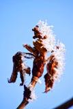 Foto macra Bosque del invierno, hojas más amarillas, agujas verdes del pino y ramas de los árboles cubiertos con los cristales de Fotografía de archivo libre de regalías